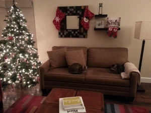 Rancho & Lux enjoying the tree