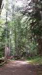 Laughing Creek hike 2