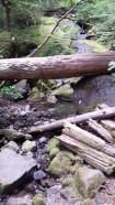 Laughing Creek hike 4