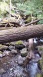 Laughing Creek hike 6