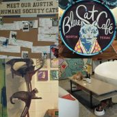 Blue Cat Cafe, wish all shelter animals could have this atmosphere waiting for their furever homes